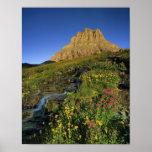 Wildflowers alpinos y Mt Clements en el paso de Lo Impresiones