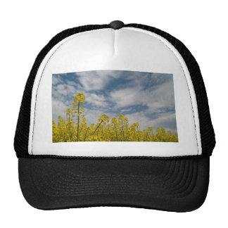 Wildflowers amarillos en el cielo gorros bordados