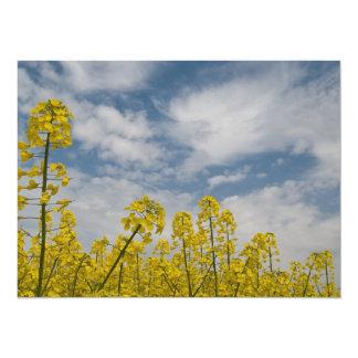 Wildflowers amarillos en el cielo invitación 13,9 x 19,0 cm