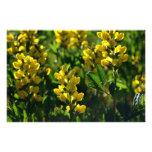 Wildflowers amarillos en las montañas de Sandia Fotografia