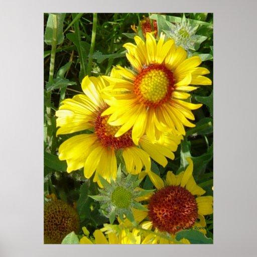 Wildflowers amarillos F0006 Póster