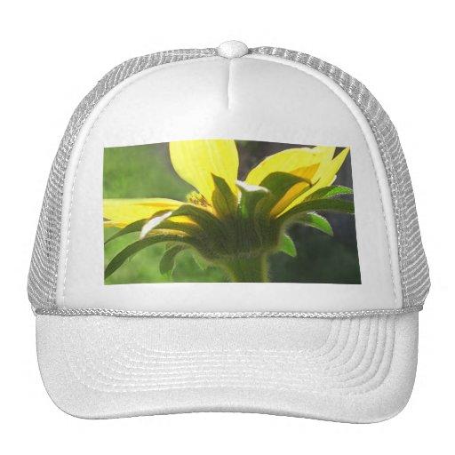 Wildflowers amarillos grandes 3 gorras