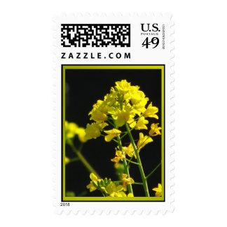 Wildflowers amarillos envio