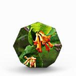 Wildflowers anaranjados