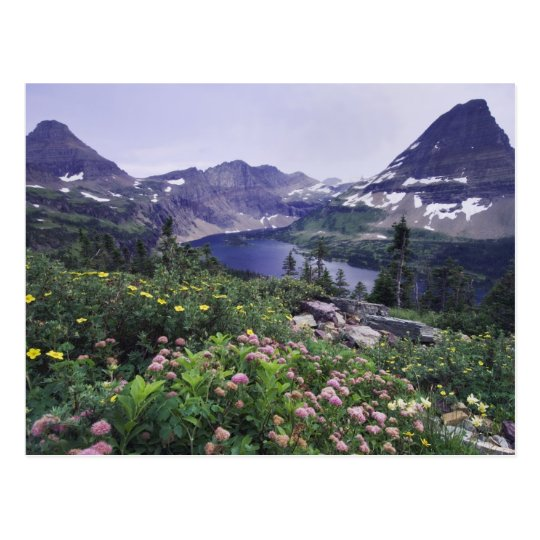 Wildflowers and Hidden Lake, Shrubby Postcard