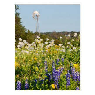 Wildflowers And Windmill In Texas Hill Country Post Card