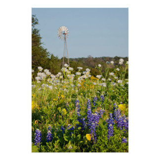Wildflowers And Windmill In Texas Hill Country Poster