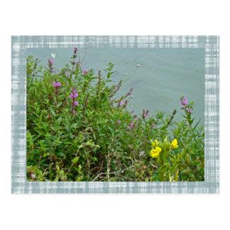 Wildflowers at Green Lane Reservoir Postcard