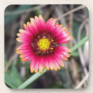 Wildflowers at the Beach Drink Coasters