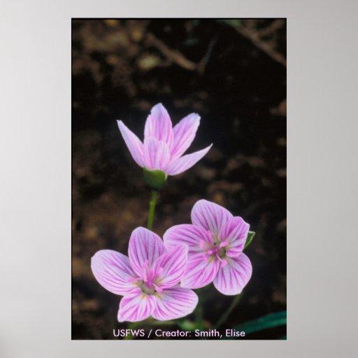 Wildflowers/belleza de primavera póster