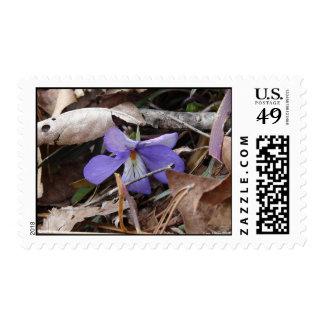 WildFlowers Birds-Foot Violet Hot Springs AR Postage