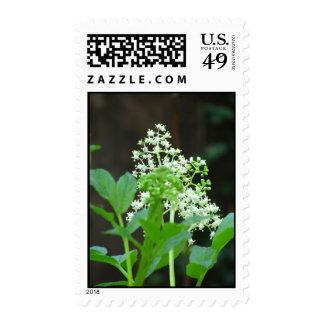 Wildflowers blancos sellos
