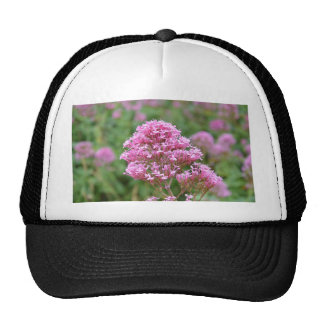 Wildflowers By The Sea Hats