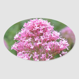 Wildflowers By The Sea Oval Sticker