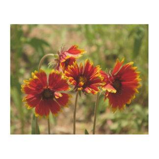 Wildflowers combinados indios cuadros de madera