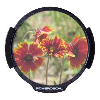 Wildflowers combinados indios pegatina LED para ventana