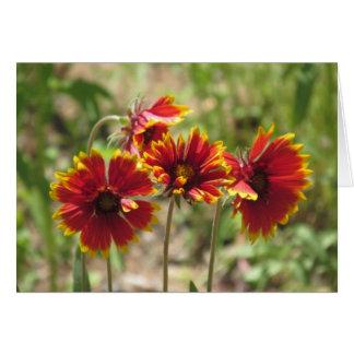 Wildflowers combinados indios tarjeta pequeña