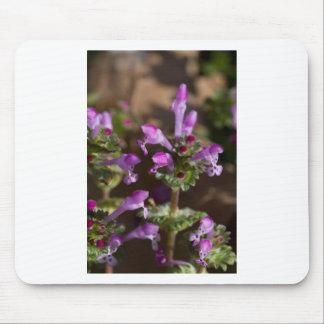 Wildflowers de Alabama Henbit Deadnettle Alfombrillas De Raton