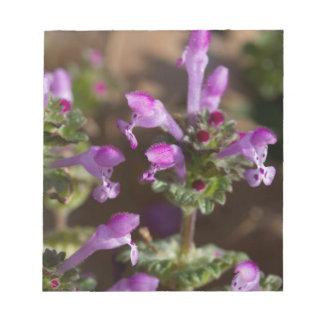 Wildflowers de Alabama Henbit Deadnettle Blocs De Notas