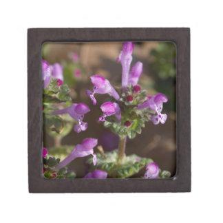 Wildflowers de Alabama Henbit Deadnettle Caja De Joyas De Calidad