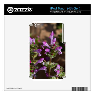 Wildflowers de Alabama Henbit Deadnettle Calcomanías Para iPod Touch 4G