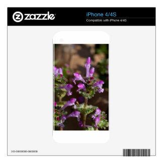 Wildflowers de Alabama Henbit Deadnettle iPhone 4S Skin