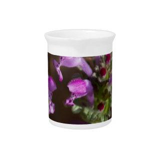 Wildflowers de Alabama Henbit Deadnettle Jarras Para Bebida