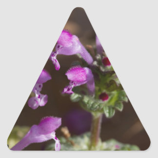 Wildflowers de Alabama Henbit Deadnettle Pegatina Triangular