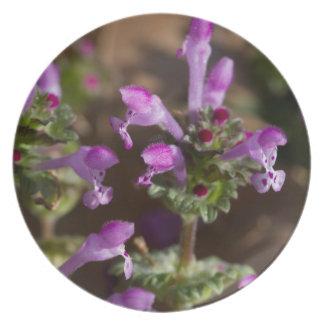 Wildflowers de Alabama Henbit Deadnettle Plato De Comida