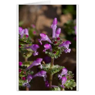 Wildflowers de Alabama Henbit Deadnettle Tarjeta De Felicitación