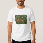 Wildflowers de Colorado Camisas