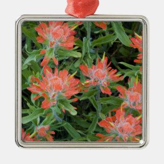 Wildflowers de la brocha india en el muchos ornamentos de navidad