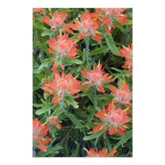 Wildflowers de la brocha india en el muchos foto