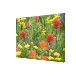 Wildflowers de la brocha india y del biscuitroot impresión en lienzo estirada