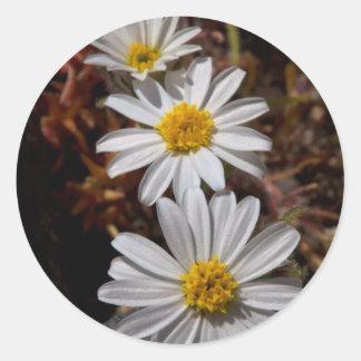 Wildflowers de la estrella del desierto pegatina redonda