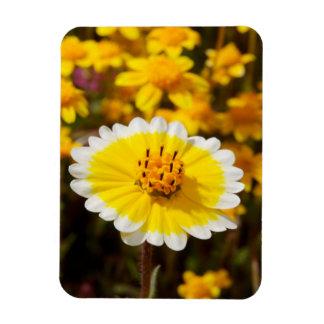 Wildflowers de la extremidad ordenada imán de vinilo