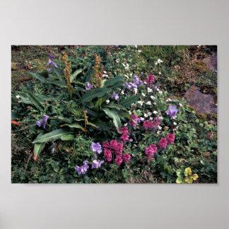 Wildflowers de la isla de Pasillo Lousewort esca Impresiones