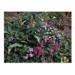 Wildflowers de la isla de Pasillo, Lousewort, esca Postales
