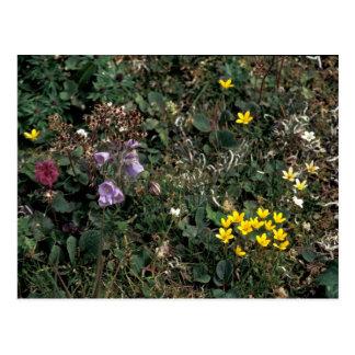 Wildflowers de la isla de Pasillo - pantano Postal