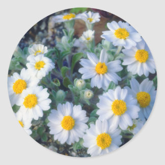 Wildflowers de la margarita lanosa pegatina redonda