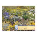 Wildflowers de la postal de Australia occidental