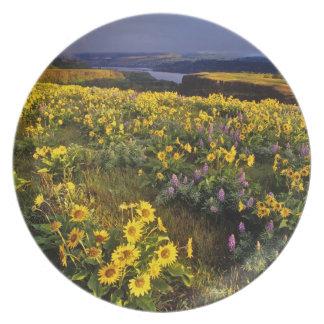 Wildflowers de la primavera en abundancia en el To Plato