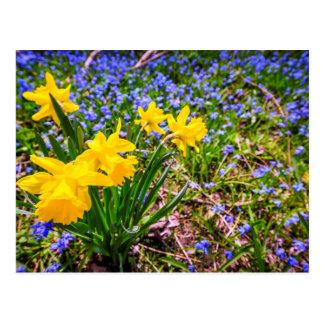 Wildflowers de la primavera tarjetas postales