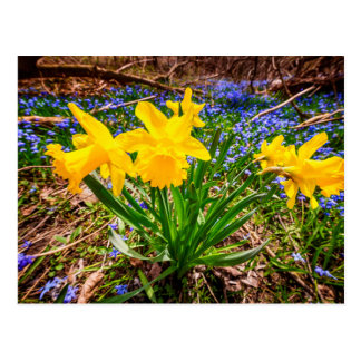 Wildflowers de la primavera