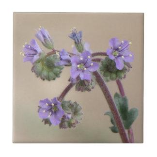 Wildflowers de la púrpura de Phacelia Azulejo Cuadrado Pequeño