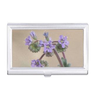 Wildflowers de la púrpura de Phacelia Caja De Tarjetas De Presentación