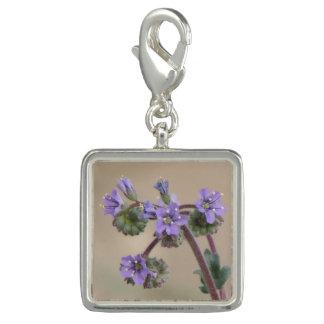 Wildflowers de la púrpura de Phacelia Dije Con Foto