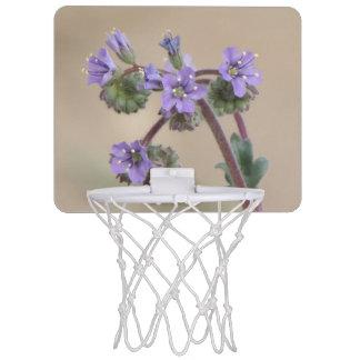 Wildflowers de la púrpura de Phacelia Minicanastas