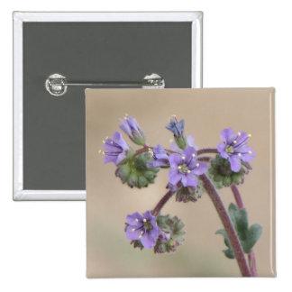 Wildflowers de la púrpura de Phacelia Pin Cuadrado