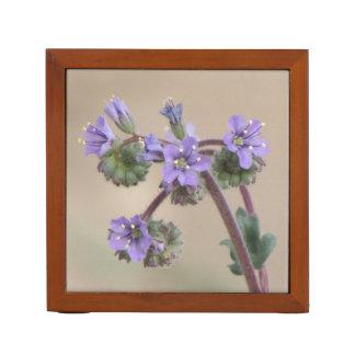 Wildflowers de la púrpura de Phacelia Portalápices